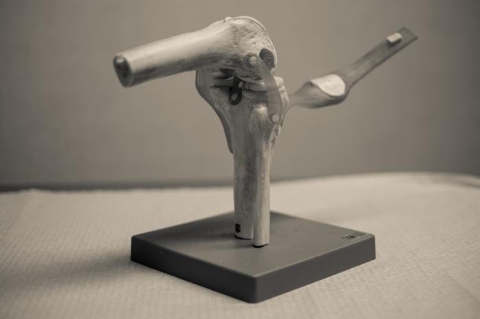 Anatomical Models (1 of 7)