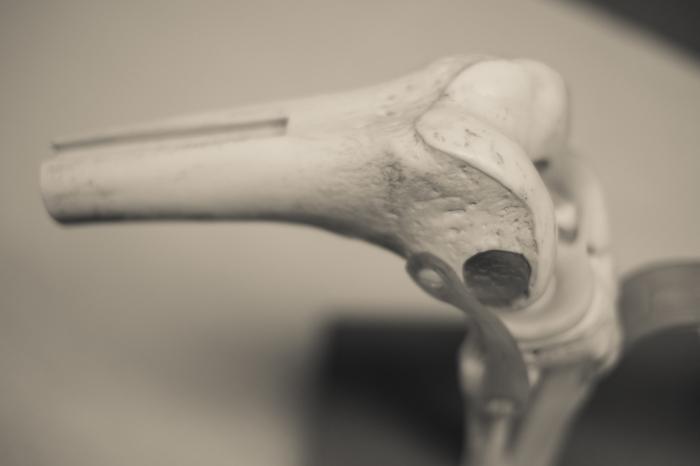 Anatomical Models (3 of 7)